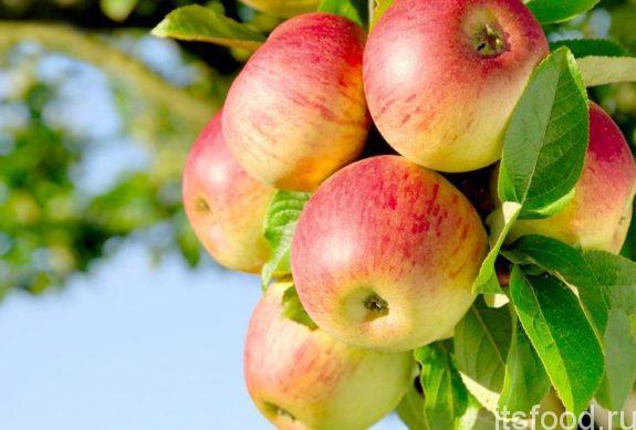 Что такое яблоко?