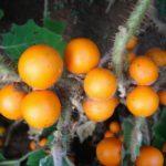 Что такое наранхилла?