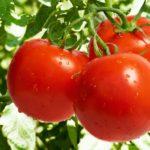Что такое помидоры?