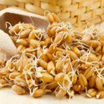 Что такое зародыши пшеницы?