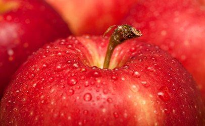 Совсем не райское яблоко