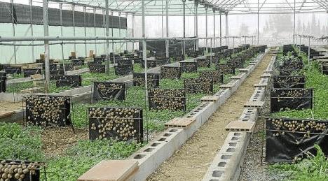 Первая ферма улиток в Англии