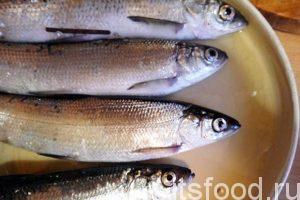 Приступаем к пряному посолу рыбы в домашних условиях: Рыба, предназначенная для пряного посола, используется в неразделанном виде. Хорошенько промываем свежую ряпушку.