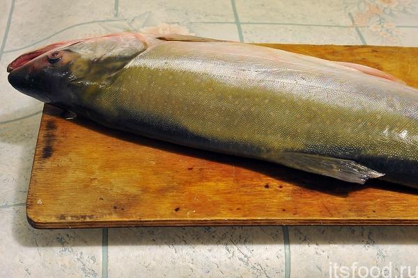 Посолить рыбу в домашних условиях голец