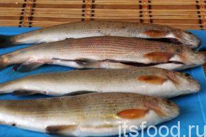 Снимаем с хариусов чешую и разрезаем брюшко. У этой рыбы богатые, залитые жиром потрошки. Печень, жир, молоки и икру можно собрать для дальнейшего применения в ухе. Промываем рыбу, удаляем сгустки крови и жабры. Даем воде стечь.