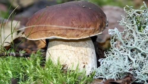 8 видов грибов, наиболее подходящих для заготовок на зиму