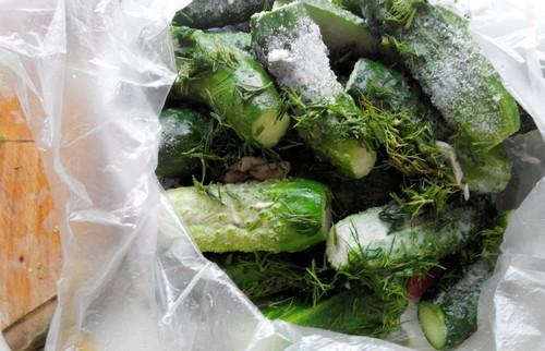 Соленые огурчики в пакете, 3 простых быстрых рецепта