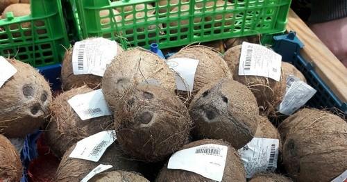Как правильно выбрать кокос в магазине