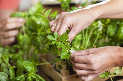 Как правильно сушить зелень на зиму