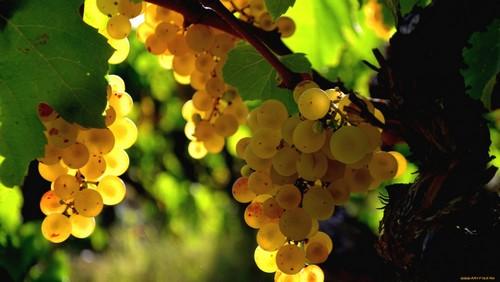 4 интересных блюда с виноградом