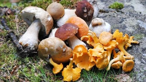 Стоит ли покупать грибы на улице – 7 советов