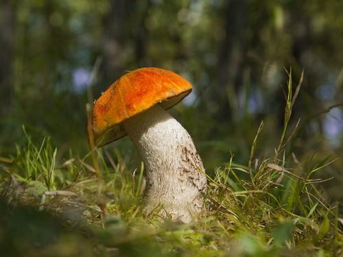 Какие грибы можно собирать в августе