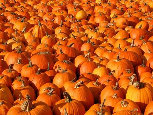 Тыквы – осеннее украшение стола на Хэллоуин